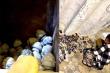 Đau lòng, phẫn nộ khi xem ảnh tro cốt chất đống trong xó ở chùa Kỳ Quang 2