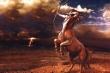 Tử vi ngày 29/7 của 12 cung hoàng đạo: Cự Giải chớ nên nóng vội trong tình yêu