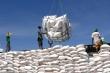 Hơn 56.000 tấn gạo trong hạn ngạch tháng 4 được xuất khẩu