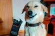1001 biểu cảm đáng yêu quá mức của thú cưng khiến 'sen' giật mình