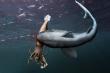 Chờ 'thủy quái' mải mê săn mồi, cá mập lao ra đánh úp rồi làm thịt