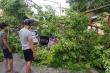 Video: Cành cây cổ thụ trong Bệnh viện 108 bị gãy, đè bẹp 3 ô tô