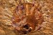 Tìm thấy ký sinh trùng trong hóa thạch 512 triệu năm tuổi