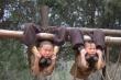 Cảnh luyện võ đầy gian khổ của các tiểu tăng Thiếu Lâm Tự