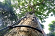 Video: Hàn khung rào sắt kiên cố bảo vệ cây sưa đỏ tiền tỷ ở Hà Nội