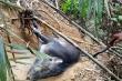 Hơn 12 triệu bẫy dây đe dọa động vật hoang dã ở Campuchia, Lào, Việt Nam