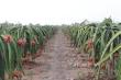Cửa khẩu Trung Quốc ngừng thông quan, nông sản Việt tìm thị trường mới
