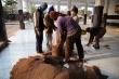 Giữa mùa dịch Covid-19, dân Thái Lan vẫn đều đặn thu thập phân dơi