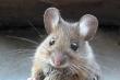 4 cách để không có chuột trong nhà bạn