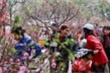 Trình Thủ tướng phương án nghỉ Tết Nguyên đán 7 ngày