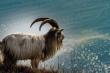 Dự đoán 12 con giáp 16/5: Mùi tình cảm lục đục, Hợi áp lực cơm áo gạo tiền