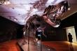 Hóa thạch khủng long bạo chúa hoàn chỉnh nhất thế giới được bán với giá kỷ lục