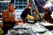 Ảnh: Ngư dân đội mưa xuyên đêm bốc cá trước giờ bão số 5 đổ bộ