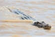 Mổ bụng cá sấu, phát hiện rúng động người đàn ông mất tích 13 năm