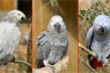 Đàn vẹt bị đuổi khỏi công viên vì 'chửi' du khách