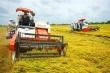 Mỗi năm, dân Việt Nam tiêu thụ gần 100 kg gạo/người