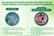Nguy cơ viêm nhiễm phụ khoa từ các loại vi khuẩn và nấm trong ngày 'đèn đỏ'