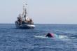 Phản đối Trung Quốc đâm chìm tàu cá Quảng Ngãi ở Hoàng Sa