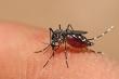 Nhiều ổ dịch sốt xuất huyết xuất hiện ở Hà Nội