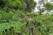 Truy bắt nghi phạm đâm, chém 4 người bị thương rồi trốn vào rừng