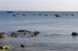 Hội Nghề cá Việt Nam phản đối Trung Quốc đơn phương cấm đánh bắt cá ở Biển Đông