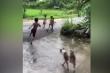 Clip: 4 cậu nhóc chạy tóe khói vì trêu chó