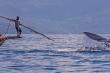 Săn cá voi bằng lao tre ở Indonesia