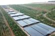 Trong cơn lốc điện mặt trời: Ra ngõ đụng tấm pin mặt trời