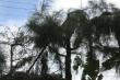 Nam sinh bị điện giật chết khi cắt tỉa cây: Cách chức hiệu trưởng