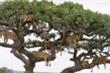 Bạn có tìm đủ 10 con sư tử trong ảnh này?