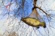 Cá nào ở trên cây?
