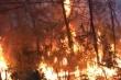 Triệu tập người phụ nữ đốt rác gây cháy rừng ở Nghệ An