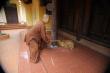 Video: Sư thầy chùa Sùng Quang lên tiếng về clip nghi đánh đập trẻ em