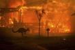 Cháy rừng Australia có thể chấm dứt vào cuối tuần