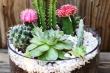 Những loại cây thanh lọc không khí căn nhà nên trồng mùa nắng nóng