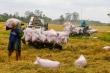 Giá gạo Việt Nam xuất khẩu cao nhất gần 9 năm