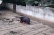 Bị gấu rừng tấn công, người đàn ông ở Quảng Nam nguy kịch