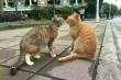 Mèo vàng bắt quả tang bạn tình đang cặp kè với 'trai lạ'