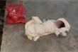 Bé gái hơn 1 tháng tuổi bị bỏ rơi trước cửa nhà dân ở Hải Phòng