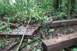 Lâm Đồng: Hai nữ lâm tặc phá hơn 5.000m2 rừng bị phạt 200 triệu đồng