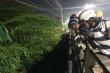 Hai thi thể nam giới nằm úp mặt dưới gầm cầu ở Bình Dương