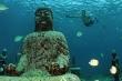 Chiêm ngưỡng tượng Phật phủ rêu ở đáy biển Bali