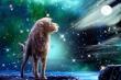 Tử vi 12 cung hoàng đạo ngày 28/11: Sư Tử tình cảm rạn nứt