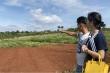Video: Loạn tình trạng xẻ đồi phân lô, bán nền trái phép tại Lâm Đồng