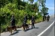 Bản tin ngày 8/6: Các mũi trinh sát chuyển hướng bắt kẻ trốn trại Triệu Quân Sự