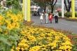 Video: Đường hoa tươi dài 700 m ở phố nhà giàu Phú Mỹ Hưng
