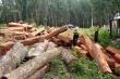 Bắt 8 lâm tặc mang theo ma túy và súng tự chế vào chặt phá rừng