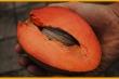Cận cảnh quả hồng xiêm ruột đỏ khổng lồ, giá đắt gấp 30 lần, bà nội trợ 'điên cuồng' săn lùng
