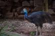 Vẻ ngoài 'lừa tình' của loài chim nguy hiểm nhất thế giới