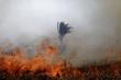 Tổng thống Brazil yêu cầu ông Macron rút lại lời chỉ trích trước khi bàn chuyện cháy rừng Amazon